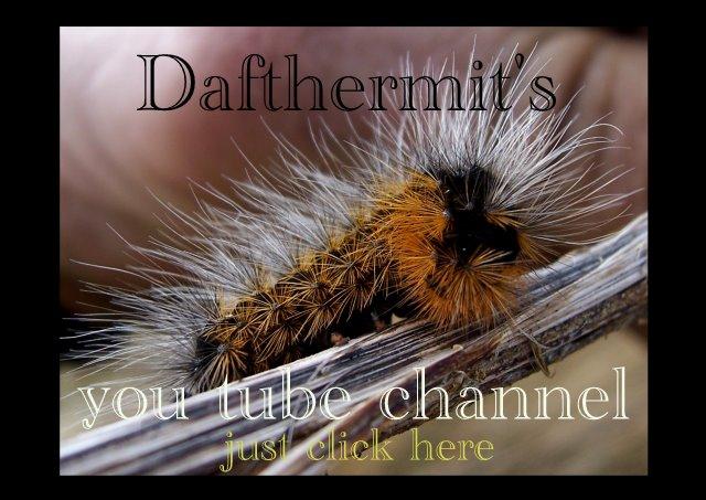 Dafthermit Channel