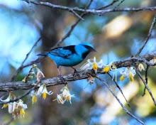 """Dia do """"Pássaro-azul"""" da Alegria..."""