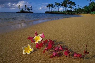 maui flowers beach