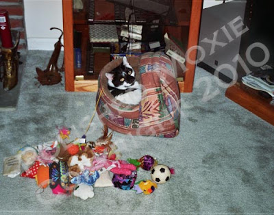 Picture of my cat sitting in his toy box with the cat toys dumped out on the floor