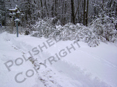 Picture of snowy path to bird feeding area