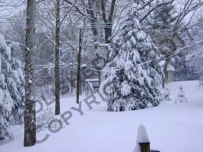 Picture of yard and trees covered in snow during snowstorm