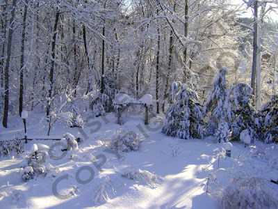 Picture of snow covered gardens in sunshine