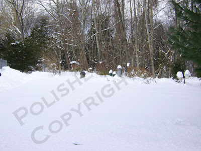 Picture of yard and garden covered in 4 feet of snow