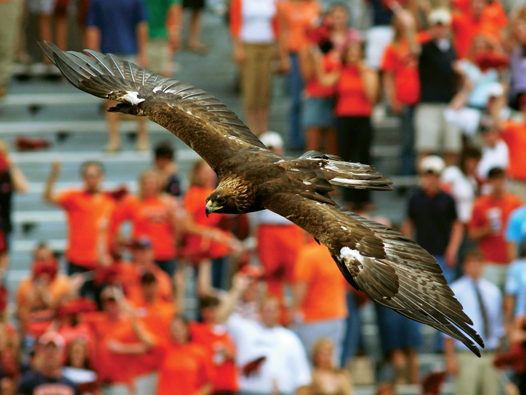 War Eagle win for Auburn,