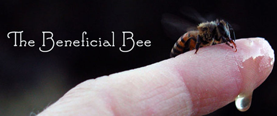 The Beneficial Bee
