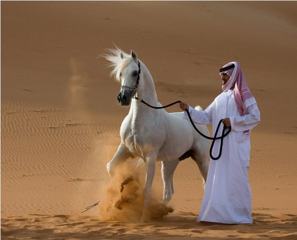 [arabian+horse2.bmp]