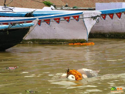 Sungai Gangga Di Penuhi Dengan Mayat Terapung