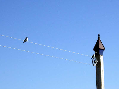 Here are the swallows last year sitting on the clothesline and checking out the Duracell House – the copper top one – get it?