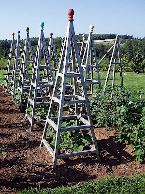 The cucumbers are going great under their obelisks this year and are already starting to climb.