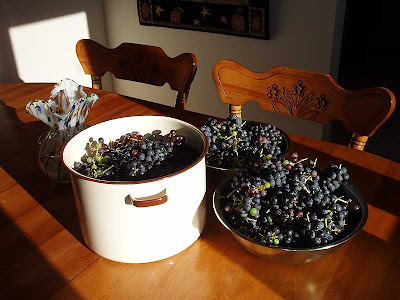 The grape harvest was great this year.