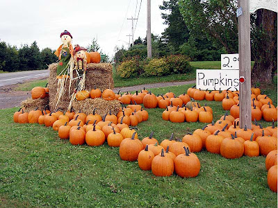 I couldn't resist stopping to see this display, and buy pumpkins, too.
