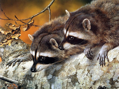 cute animal wallpapers. cute animals wallpaper.