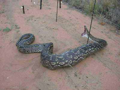 Giant Anaconda Pictures