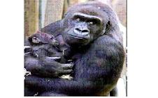 Grandes primates y su sexualidad...