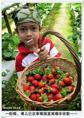 42. 坠入草莓的圈套