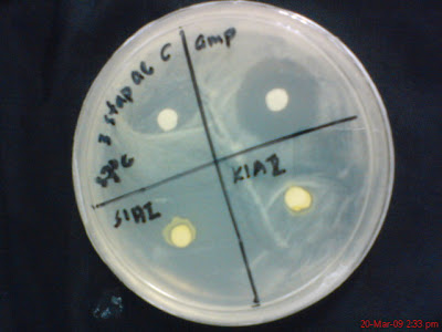 Round 3 (MNA+Staphylococcus+S1AI+K1AII)
