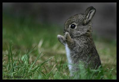 [Image: cute_bunny.jpg]