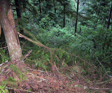 north american bigfoot molalla sighting investigation