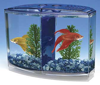 Male betta fish for sale for sale for Betta fish tanks for sale