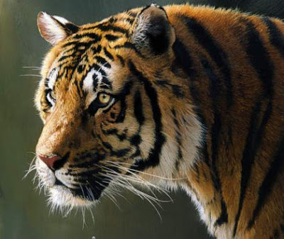 Buy Tiger Image