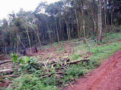 Grupo ecologista cu pir septiembre 2010 for Importancia economica ecologica y ambiental de los viveros forestales
