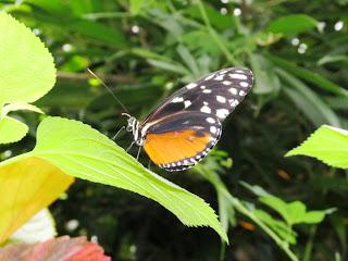 Butterfly Gardens, Victoria