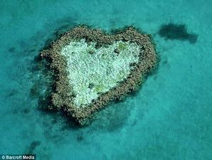 Foto Kehidupan Purba di Dasar Laut Australia