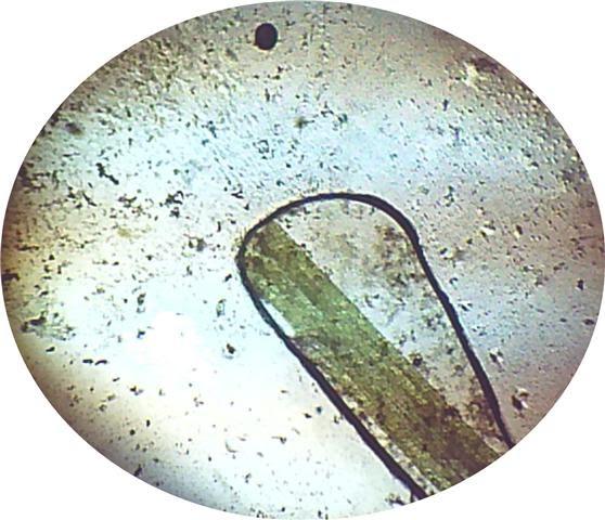 BIOECOLOGIA Plantas Acuaticas