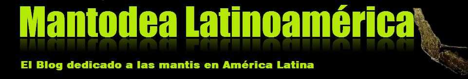 Mantodea Latinoamérica