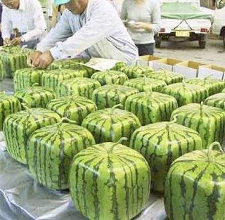 Cube Watermelon