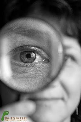 Anatomia unui ochi