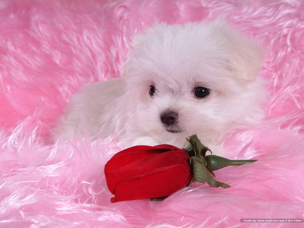 http://1.bp.blogspot.com/_EAViqbzwc_s/TKGT_rGuruI/AAAAAAAABXo/NhJtnQZwdSI/s1600/dog%20(3).jpg