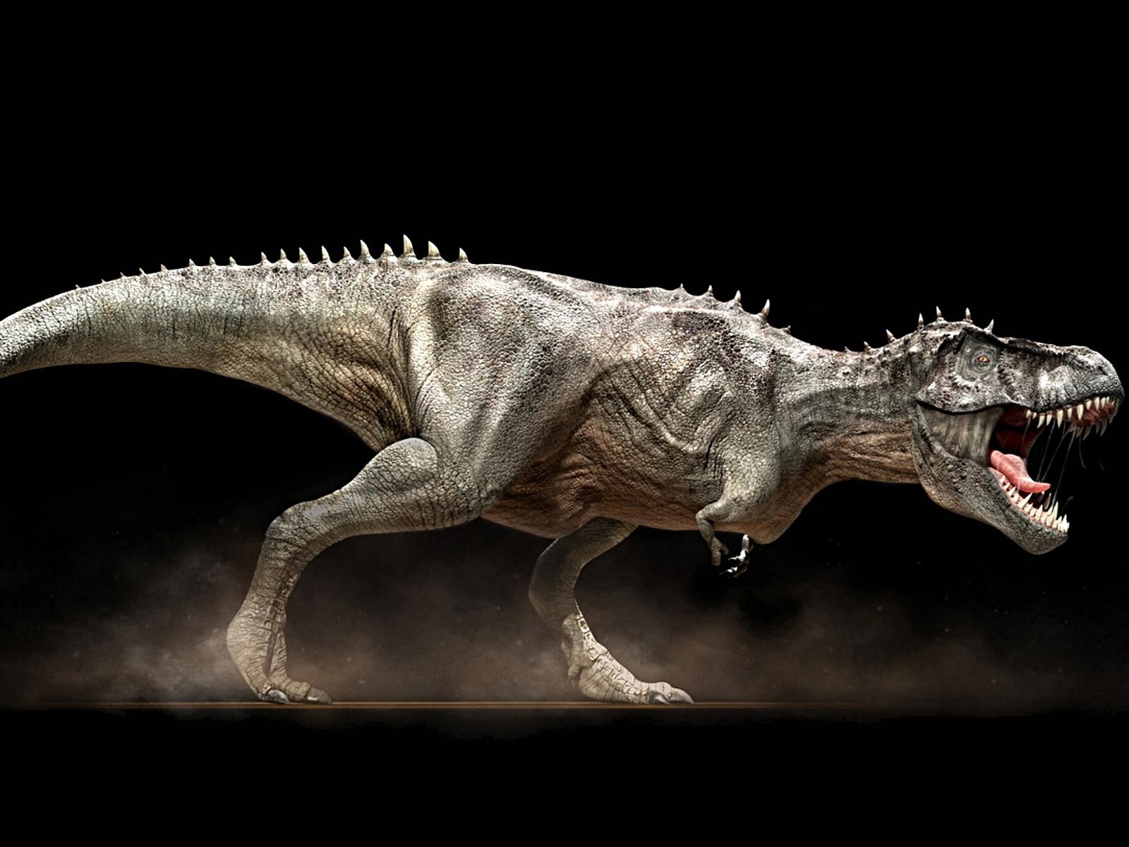 Cold valentine november 2011 for Tyranosaurus