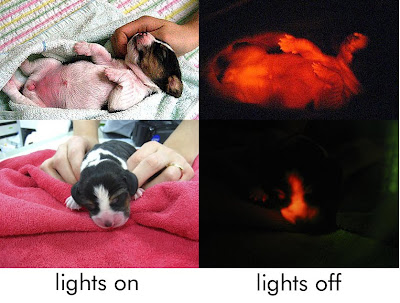 [Image: lightsonlightsoff.jpg]