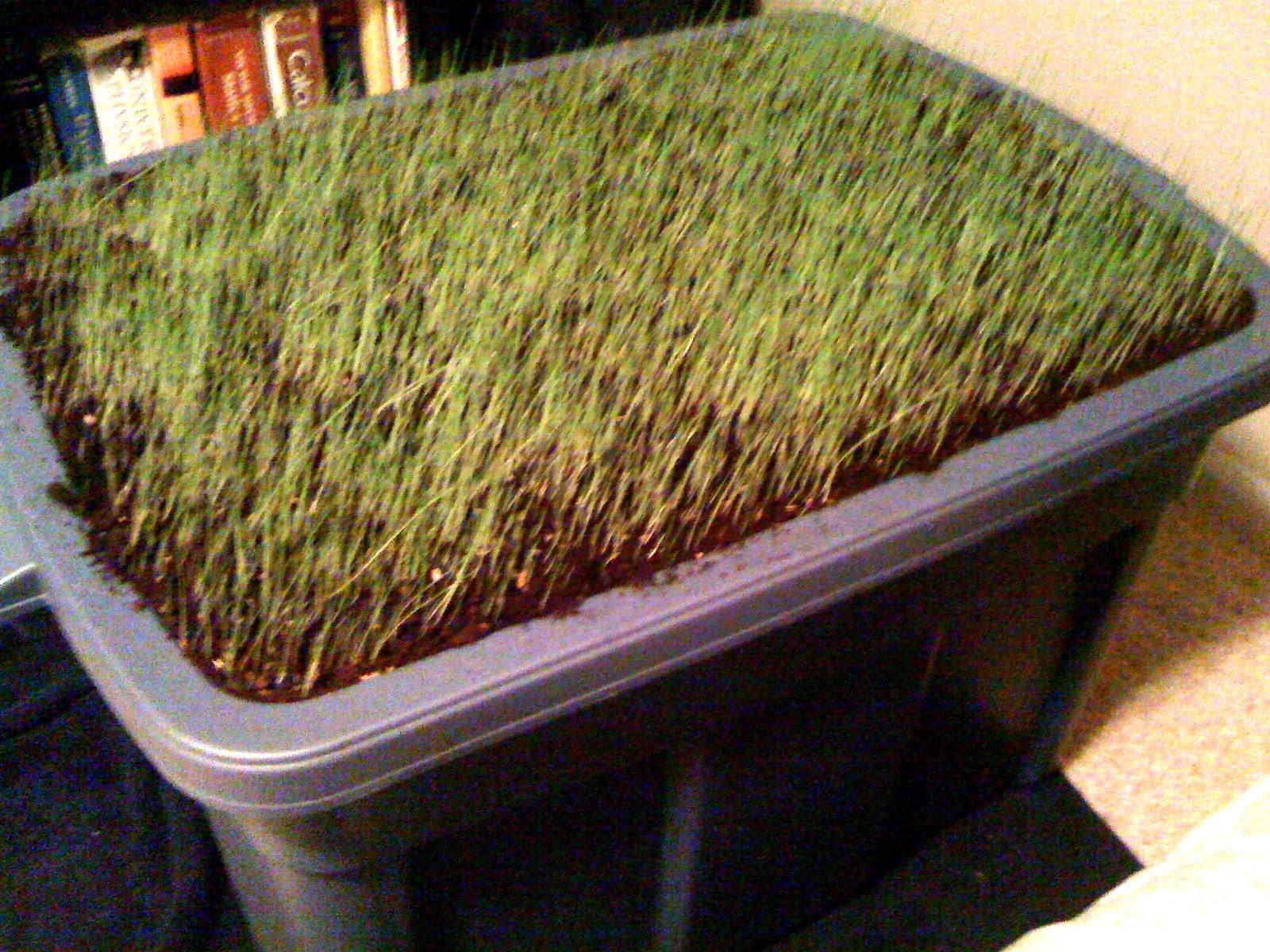 how to grow grass with dogs