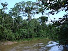 Rio Acuraua