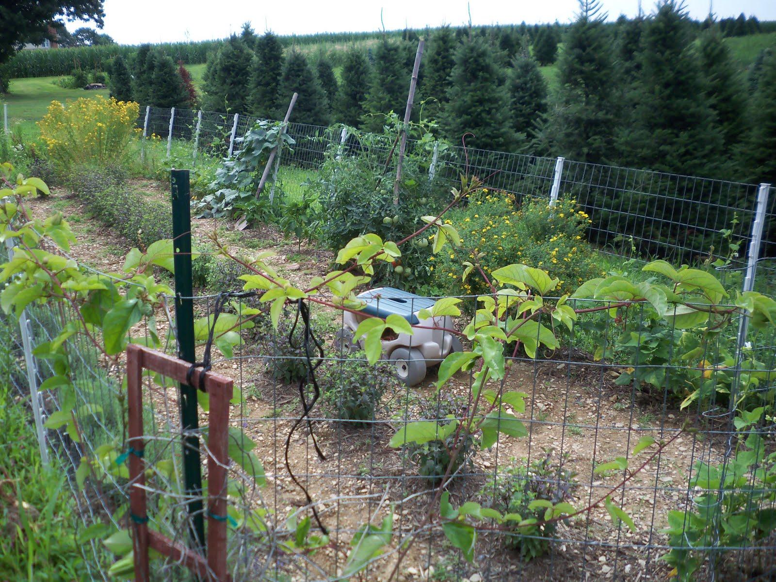 Vegetable Garden Fence Ideas Rabbits The Main Vegetable Garden Is
