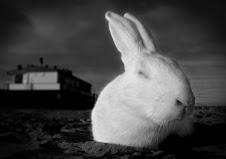 Resta vile coniglio, dove vai?