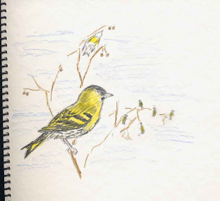 The first Siskins