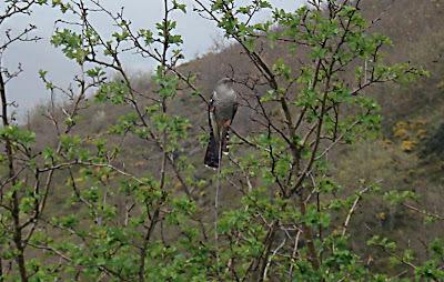 Breeding Bird Survey . Square VN3040