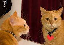 Mirándose al Espejo