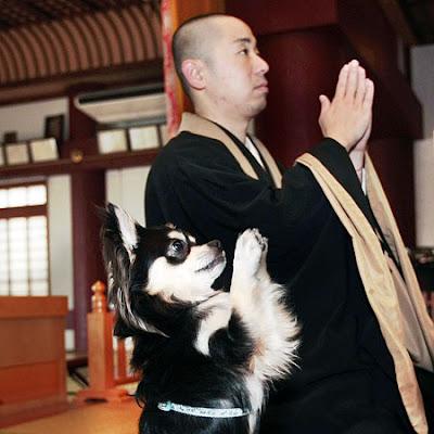 praying dog, dog praying, funny dogs, funny dog, praying, monk, monk and dog, praying monk, bald man, cute dogs, cute dog, weird, weird pics