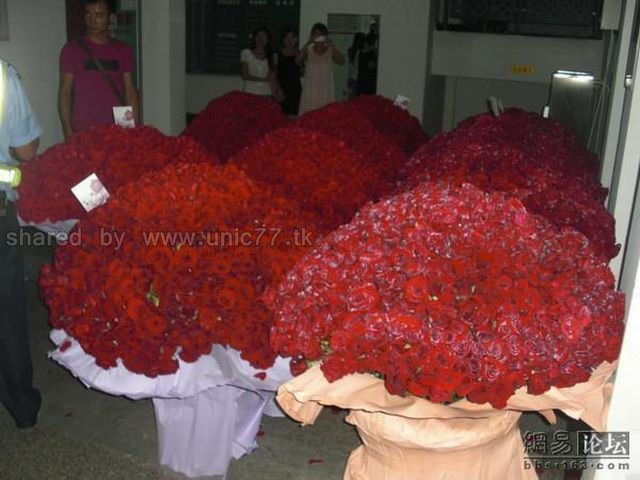 http://1.bp.blogspot.com/_EHi0bg7zYcQ/TJhV7ndEY4I/AAAAAAAAE6o/9dH6Hltpkfg/s1600/ocean_of_red_roses_06.jpg