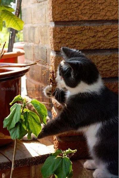 http://1.bp.blogspot.com/_EHi0bg7zYcQ/TJrFtYV_hzI/AAAAAAAAFaA/tssXp5l7BaQ/s1600/one_blind_cat_640_12.jpg
