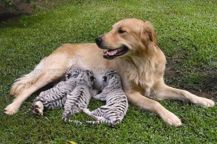 http://1.bp.blogspot.com/_EHi0bg7zYcQ/TKVVmSr8YoI/AAAAAAAAI2U/DrieZVVcqgk/s1600/animal_adoptions_01.jpg