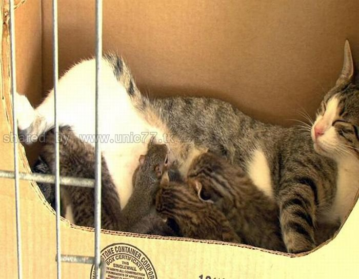 http://1.bp.blogspot.com/_EHi0bg7zYcQ/TKVVmk8D1zI/AAAAAAAAI2c/_hPuVRB6MII/s1600/animal_adoptions_02.jpg