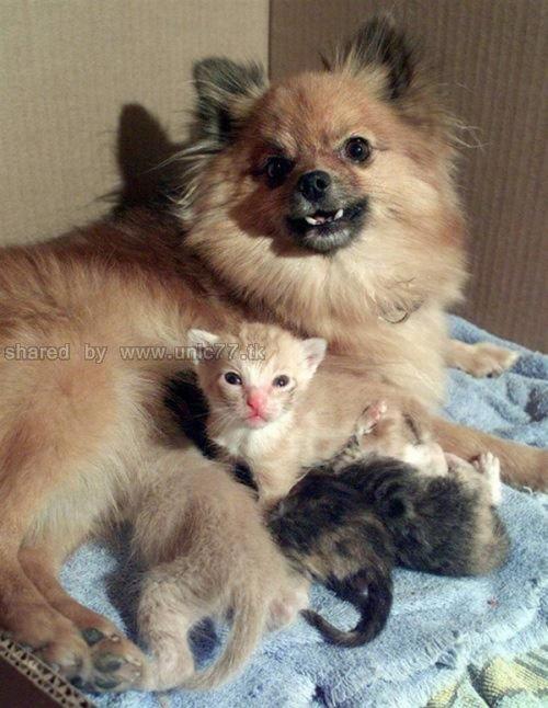 http://1.bp.blogspot.com/_EHi0bg7zYcQ/TKVW1N-NA_I/AAAAAAAAI3U/EmssiCuI8Ts/s1600/animal_adoptions_09.jpg