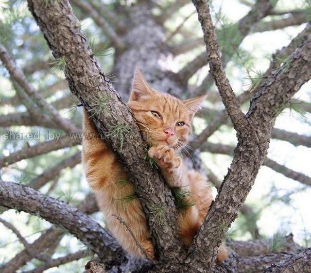http://1.bp.blogspot.com/_EHi0bg7zYcQ/TLahhCPIuxI/AAAAAAAANG0/rbxxz5fOwsA/s1600/these_funny_animals_515_640_11.jpg