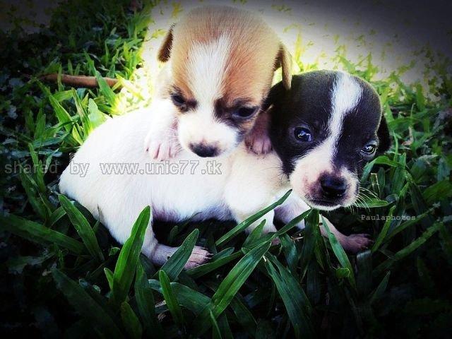 http://1.bp.blogspot.com/_EHi0bg7zYcQ/TLal34vZFtI/AAAAAAAANHs/jkAPDil-q8o/s1600/these_funny_animals_515_640_18.jpg